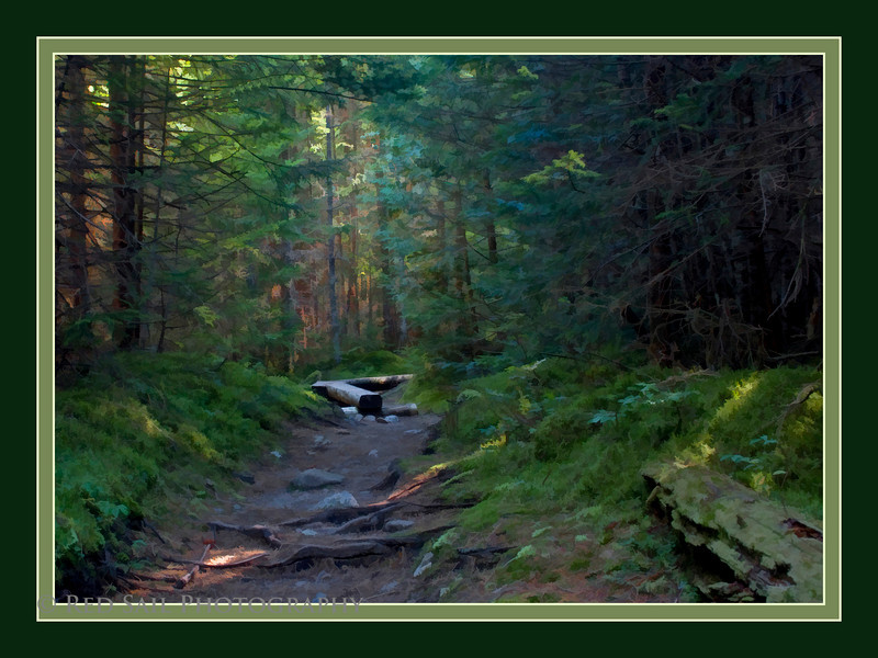 TRANQUILITY.... This forest trail in the North Woods of Maine is one of the most peaceful places on earth. A strong pine scent forces us to stop and enjoy this dark coolness. A great break during a long hike.