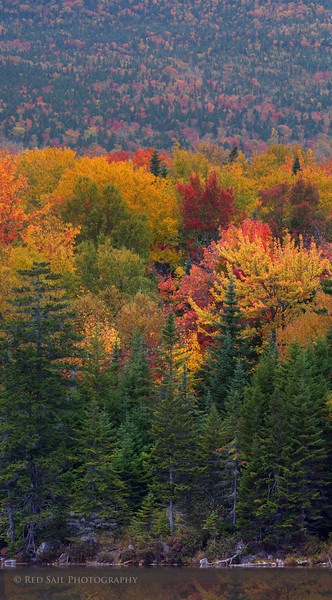 A vertical panorama of the forest at Sandy Stream Pond in Baxter State Park, Maine. Oct 2012