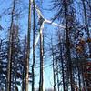 Bear Mountain Wind Park, Dawson Creek, BC.