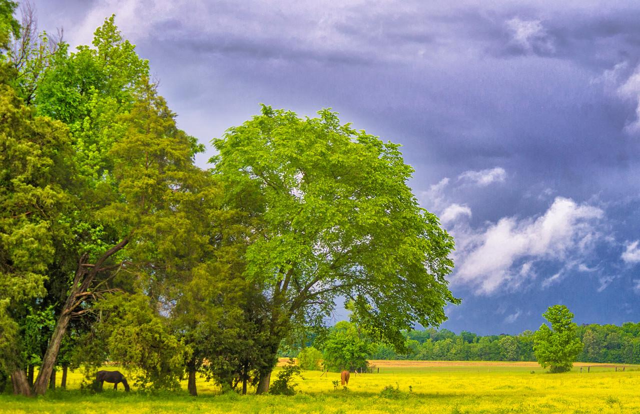 Limestone County, Alabama near Browns Ferry Road
