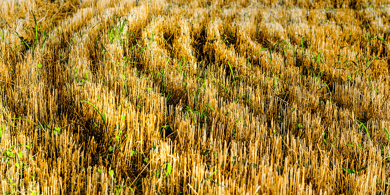 Waves of contrast accentuate a harvested field, Limestone County, Alabama