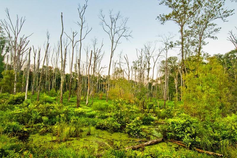 Swamp near New Hope, Alabama off Hwy 431