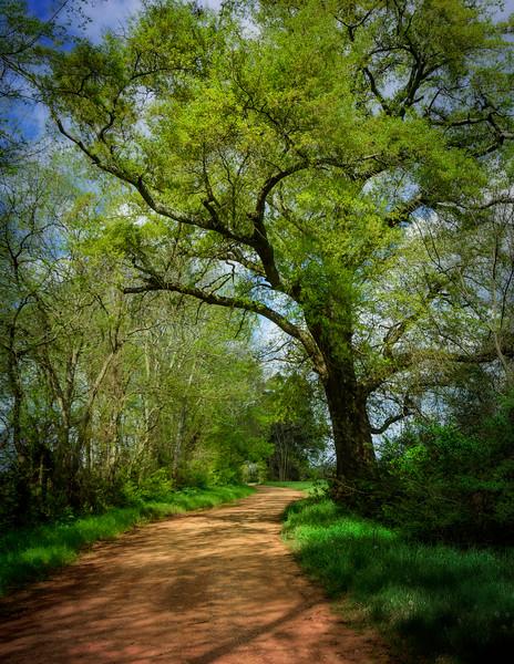 Springtime on a Farmer's Lane