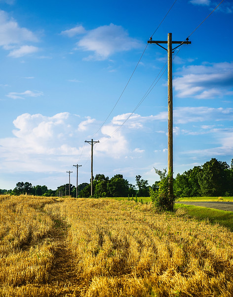 Harvested Field, Limestone County, Alabama
