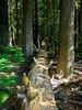Humbolt Redwoods, California 2008