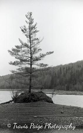 The Tree-Brassua Lake, Maine