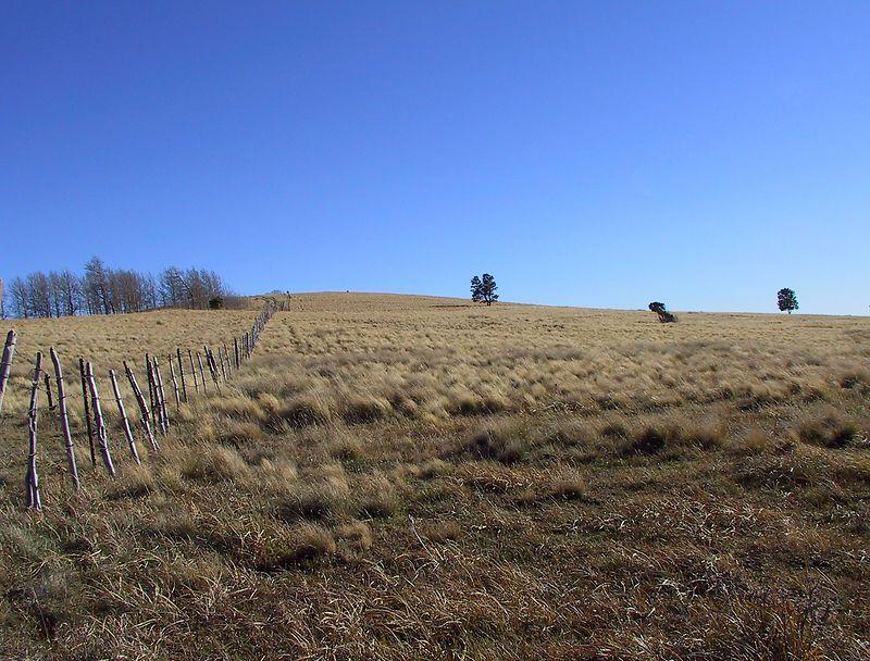 Southern San Juan Mountain meadow.
