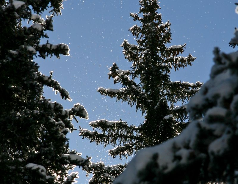 Ice crystals falling from tree