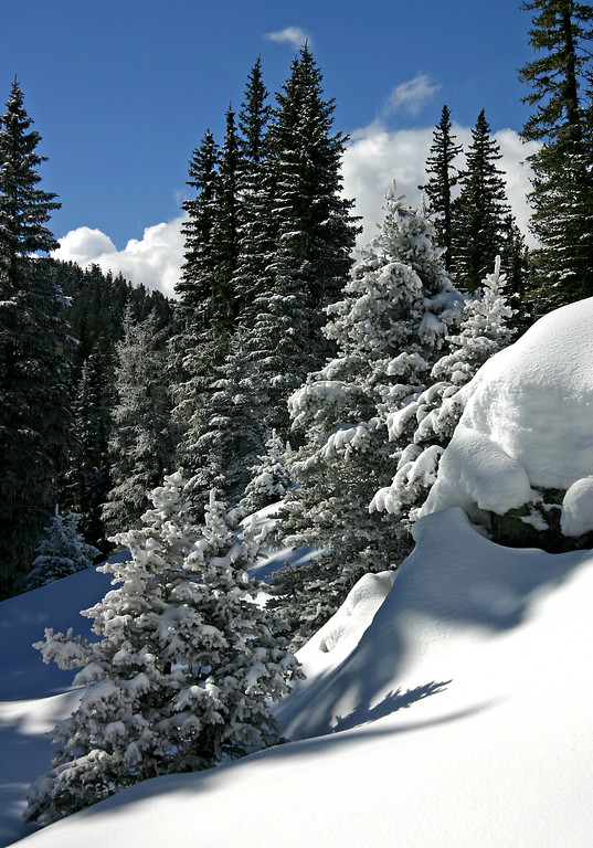 Jemez Mountain winter scene