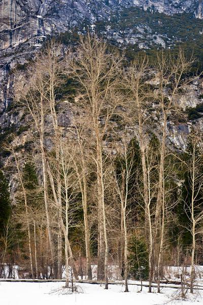 Trees,winter.