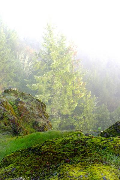 Foggy morning, coastal forest.