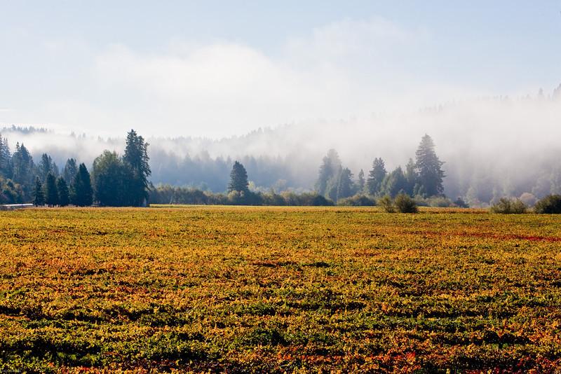 vineyard in the fall