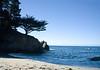 Silhouette, Point Lobos State Park