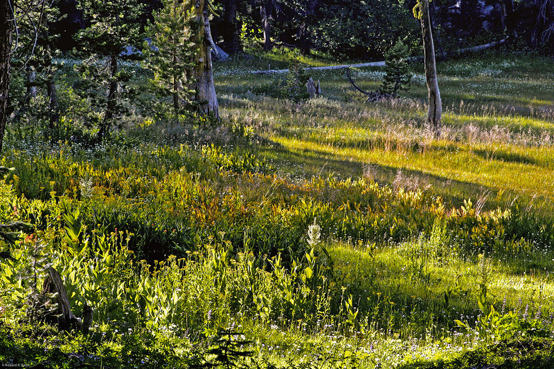summer in a mountain meadow... the white of winter... scatters into rainbow hues