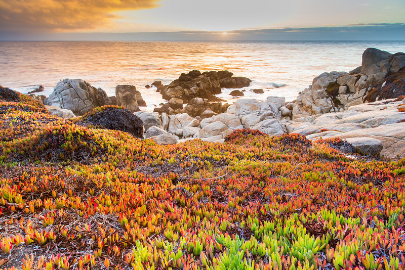 Wild Sunset Succulents Horizontal