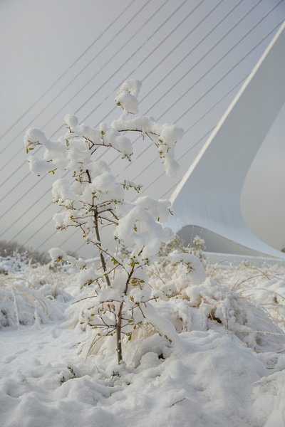 Sundial Bridge and Snow Vertical