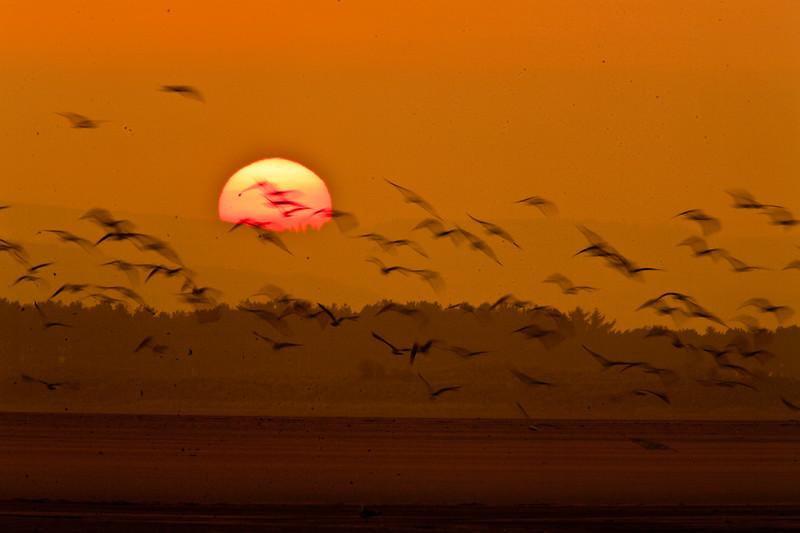 Budle Bay Birds