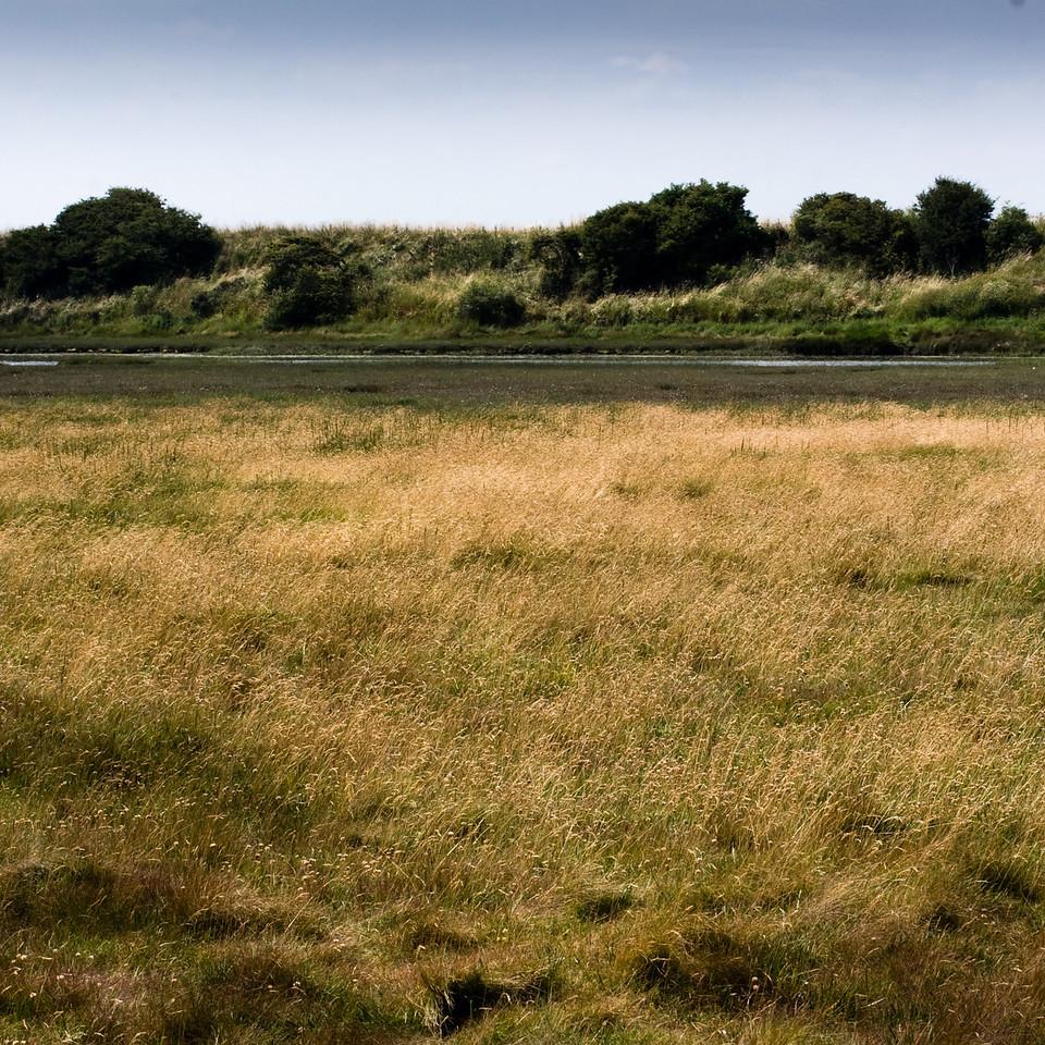 Warkworth, the salt water marsh, Northumberland UK