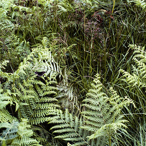 Doddington Moor, Northumberland UK