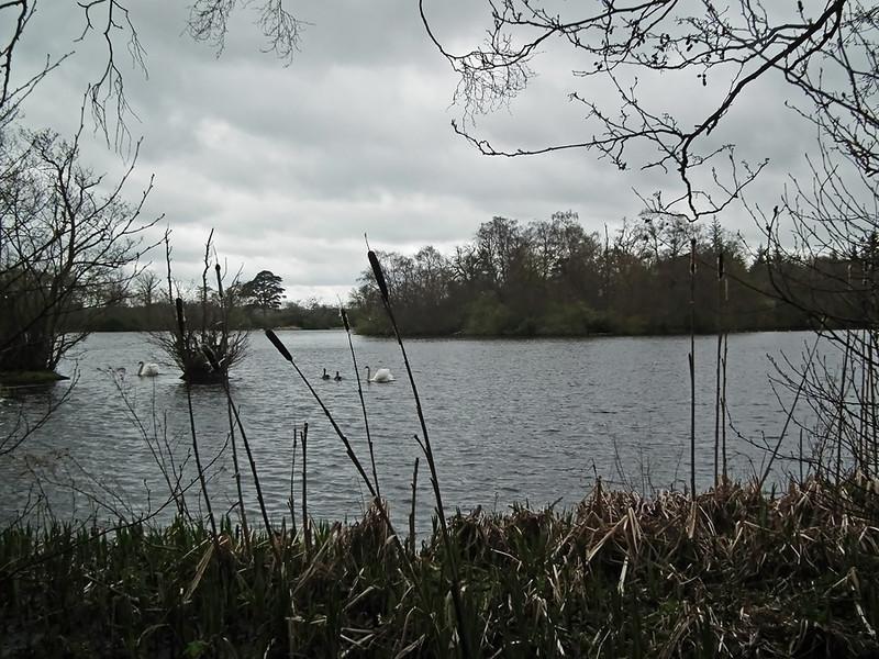 Bolam Lake,