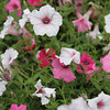 A flower patch in Toledo Botanical Gardens. On my list to print on canvas for next summer.