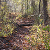 A path covered with leaves and a small pond in the distance. Taken at Pearson Park. I printed this on 2x3 canvas and put it out in the fall time.