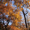 Taken at Pearson metro park. I love the gold foliage in the fall. I printed this on a 2x3 canvas and put it up during fall.