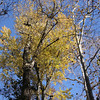 Fall foliage in Pearson Park.