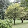 A view of summer foliage- Toledo Botanical Gardens.