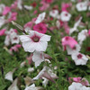 A close up shot of a flower patch in Toledo Botanical Gardens. On my list to print on canvas for next summer.