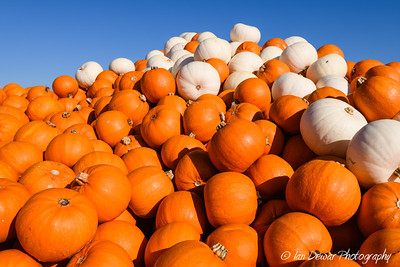 A huge pile of orange and white pumpkins under a clear blue sky