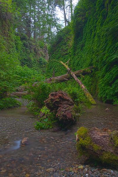 Fern Canyon, Northern Califorina Coast
