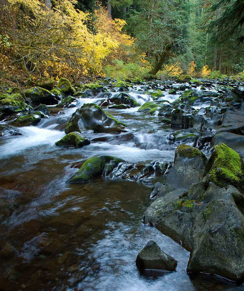Sol Duc River in Fall Color, Olympic National Park