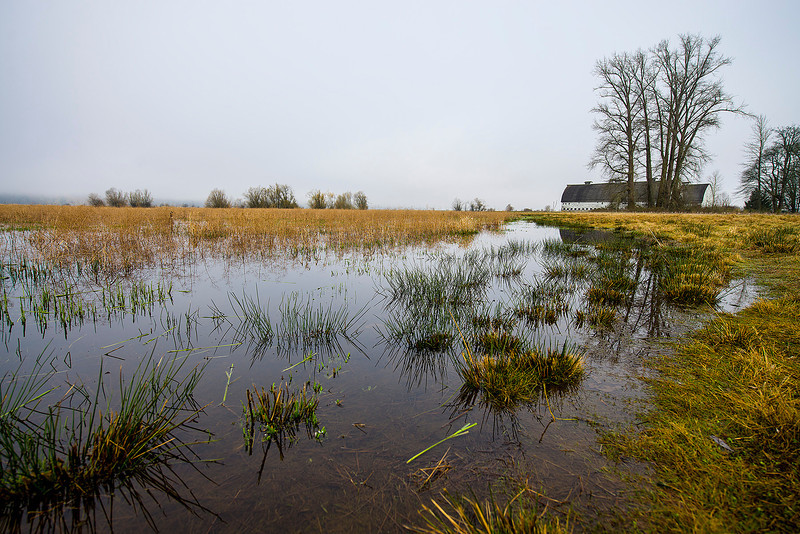 Nisqually National Wildlife Refuge 03/08/13. Nikon D600 & Nikon 14-24mm f2.8 AF-S.