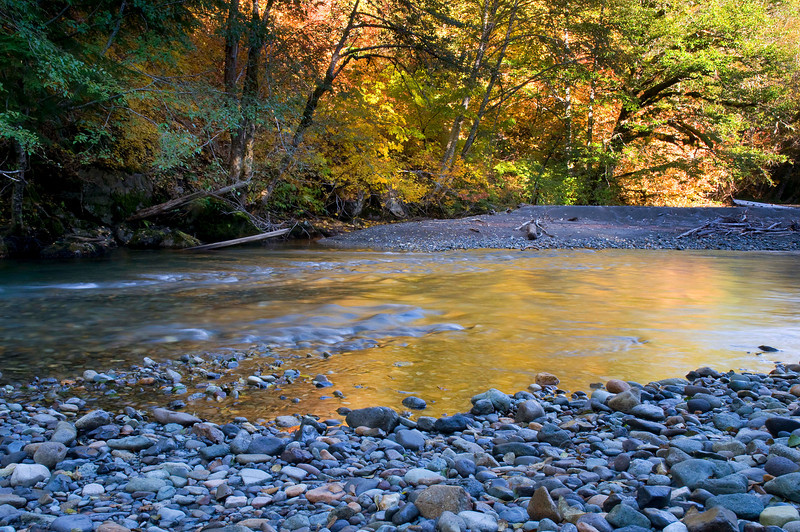 Fall Color Ohanapecosh River, Grove of the Patriarchs, Mount Rainier National Park, WA
