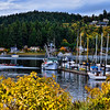 Gig Harbor Washington in Fall color.