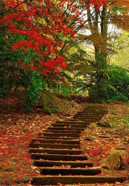 Seattle Arboretum Fall Color