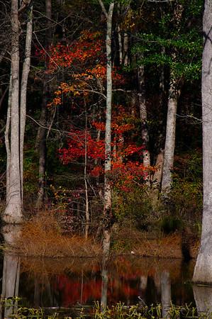 northwood swamp