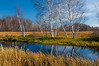 NWB-10065: Birch reflections at Crex Meadows WMA