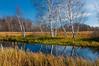 NWB-10065: Birch reflections at Crex Meadows WMA
