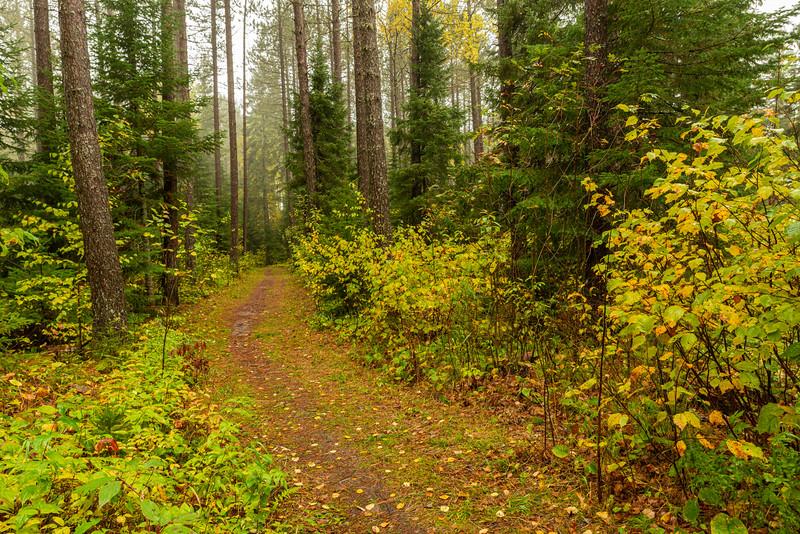 Trail in George Washington Pines