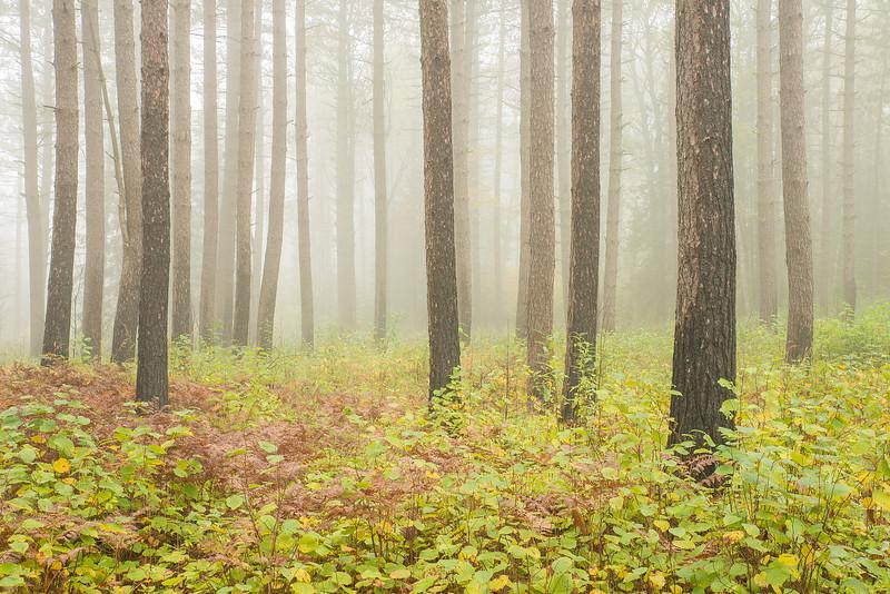 Foggy morning at George Washington forest