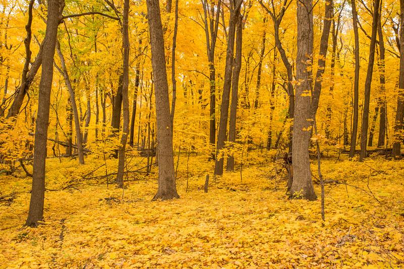 October at Wolsfeld Woods