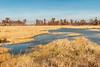 Wetland in November