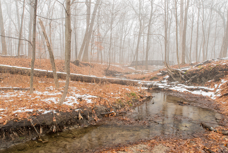 Foggy morning in the Big Woods