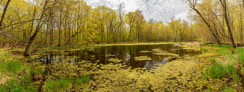 Henry's backwater pond in spring