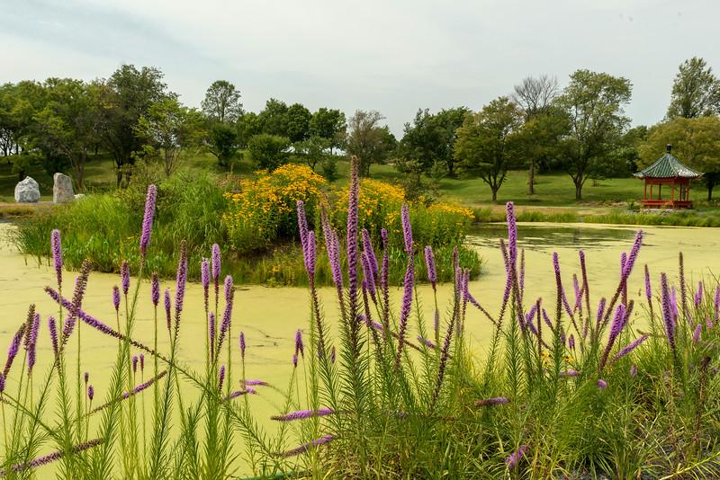 Chinese Garden at the Arboretum