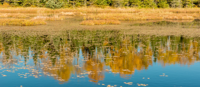 Moose Country reflections