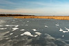 First ice in wetland