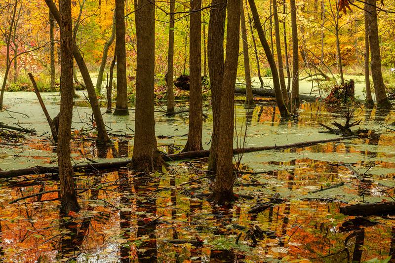 Backwoods pond
